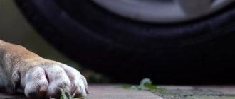 Сбил собаку: лишат ли прав за ДТП с животными?