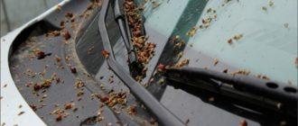 Как быстро и безопасно удалить тополиные почки с кузова автомобиля