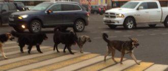 Откуда собаки знают, что дорогу нужно переходить на зеленый